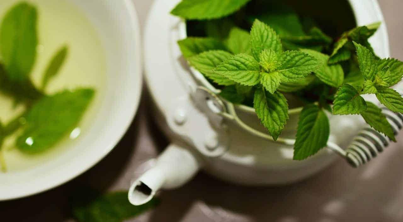 شاي نعناع - Orchidfulifestyle