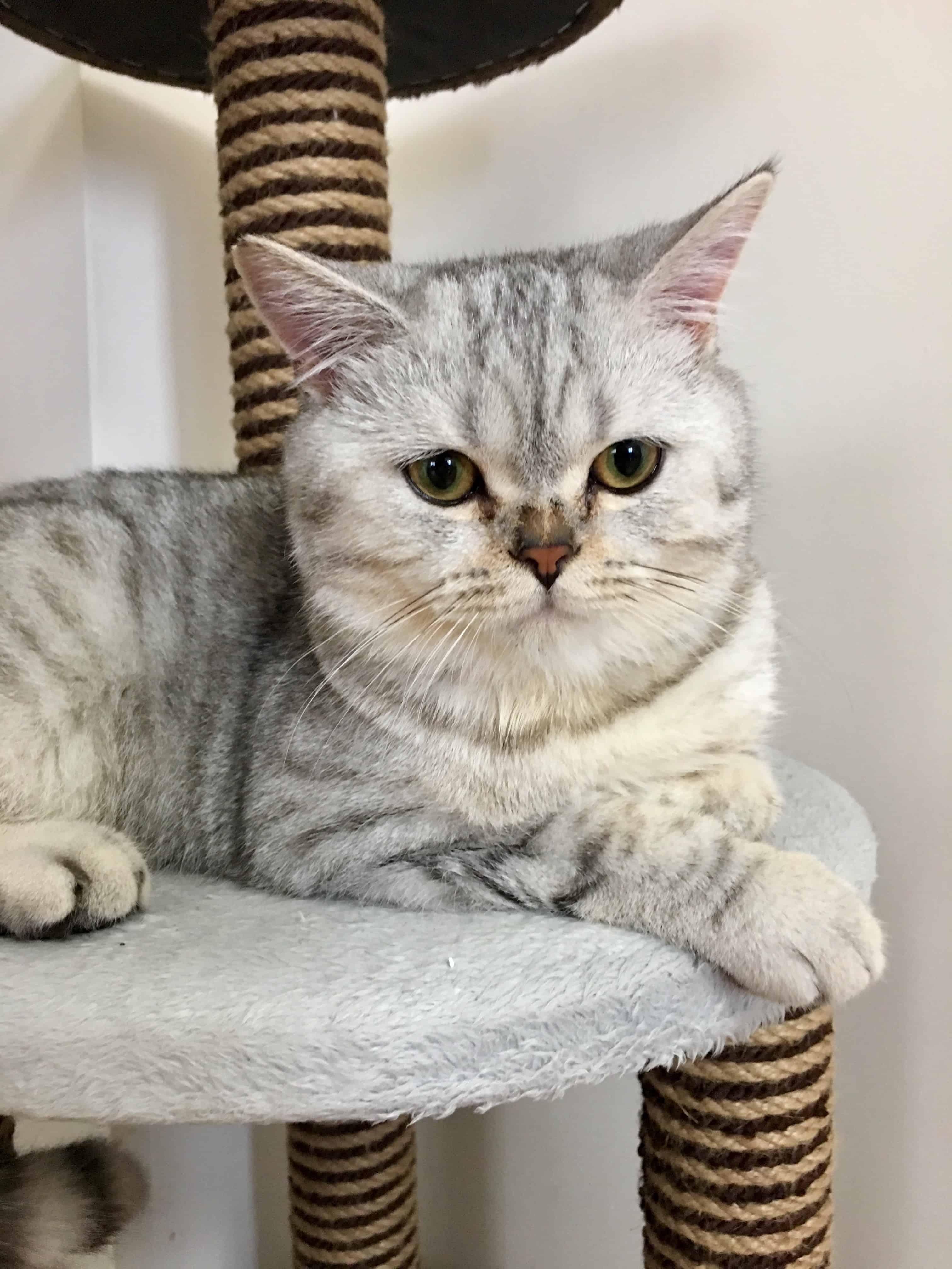 القط توتو بعد عدة أشهر - orchidfulifestyle