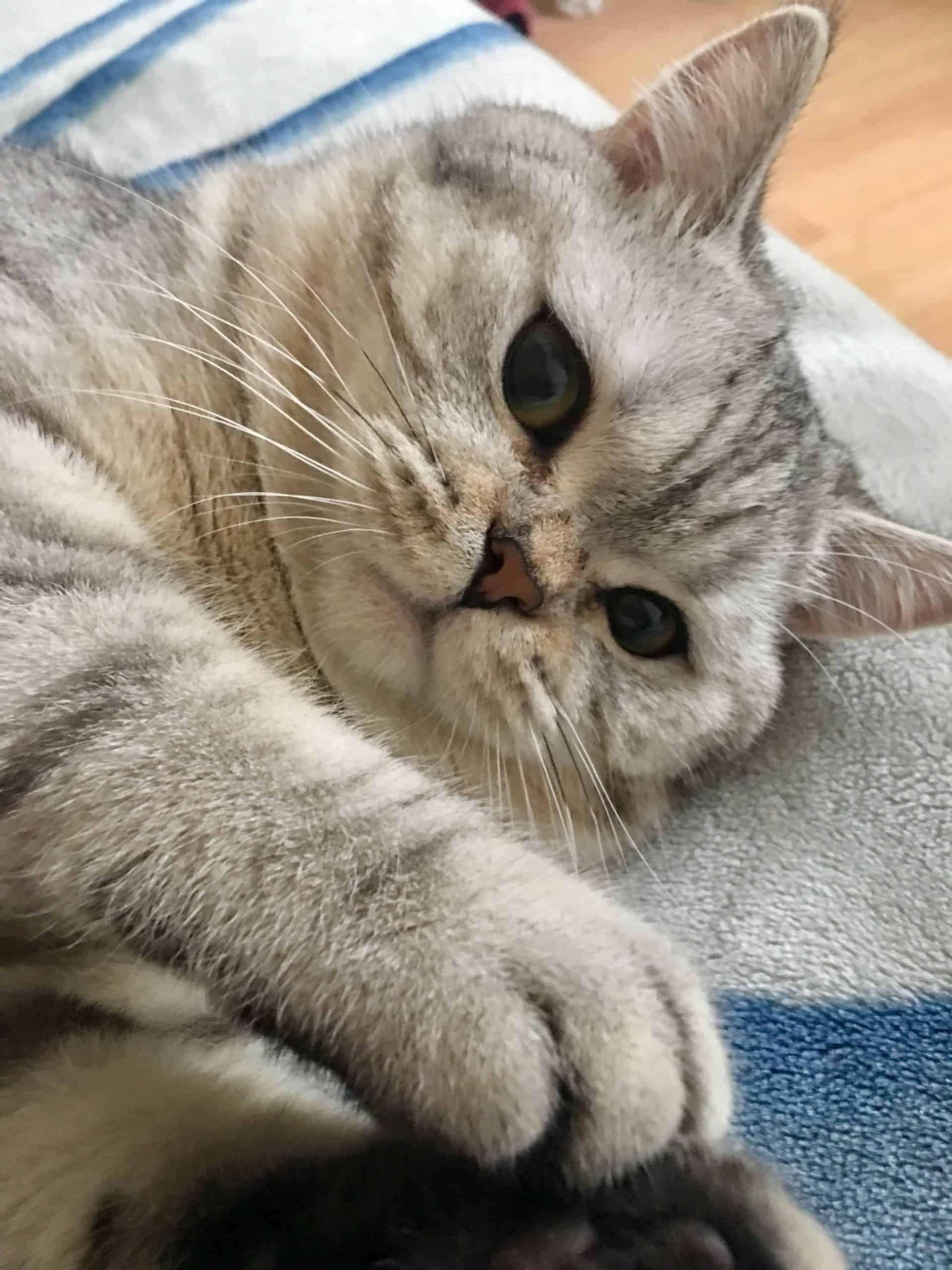 القط توتو - حيوان أليف - orchidfulifestyle