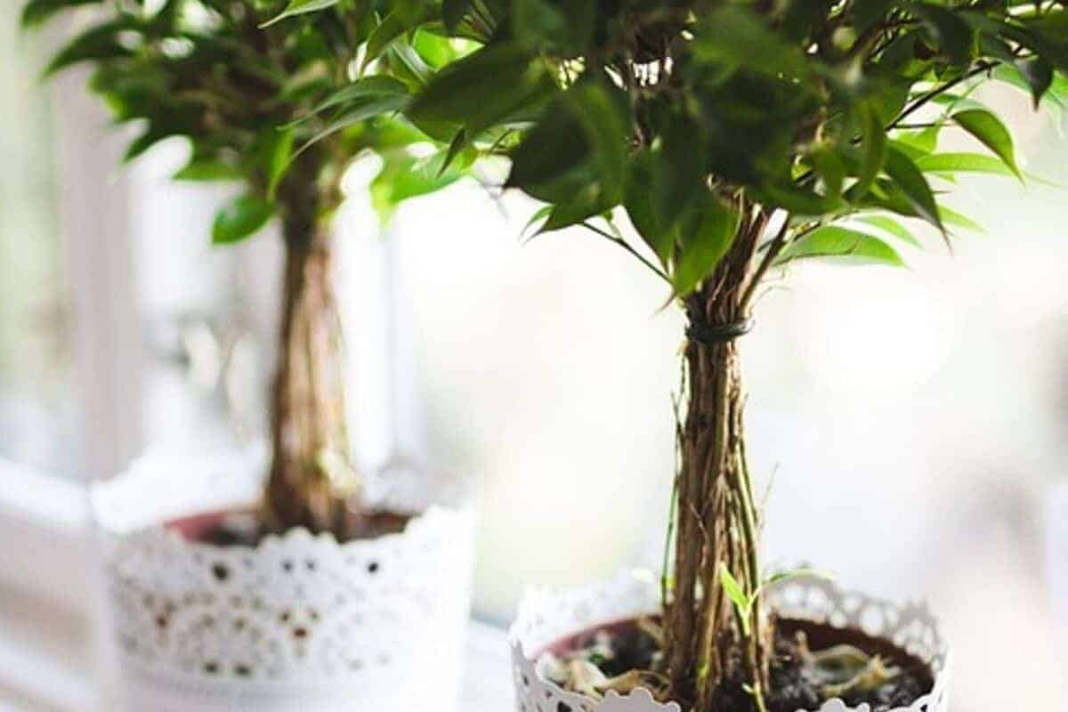 إضافة النباتات - orchidfulifestyle