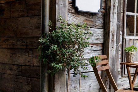 عنصر الخشب علم طاقة المكان - orchidfulifestyle